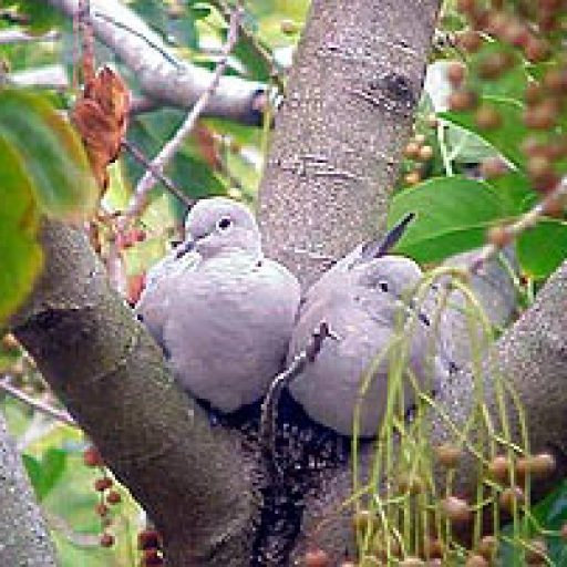 cropped-lovebirds4-best-23.jpg