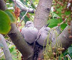 lovebirds4-best-2