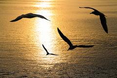 seagulls-flying-26933029