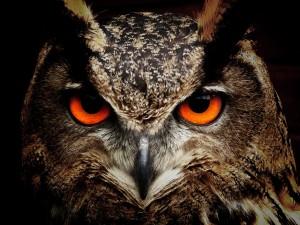 owl-50267-1200x900